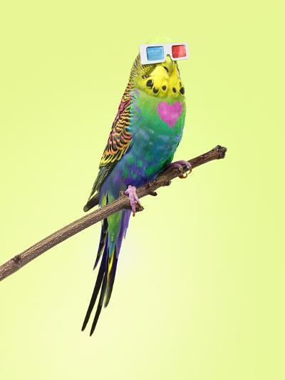Neon Rainbow Coloured Budgie with 3D Glasses-Michael Blann-Photographic Print