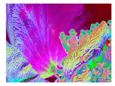 Neon Rose 1-Rose Anne Colavito-Art Print