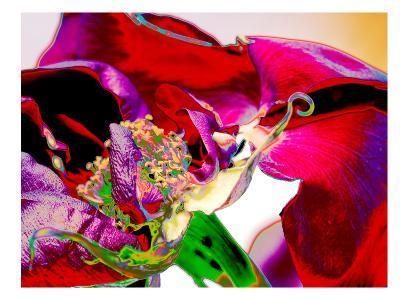Neon Rose-Rose Anne Colavito-Art Print