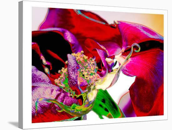 Neon Rose-Rose Anne Colavito-Stretched Canvas Print