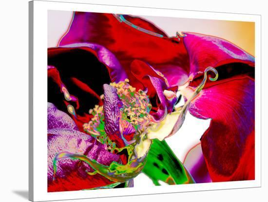 Neon Rose-Rose Anne Colavito-Stretched Canvas Print