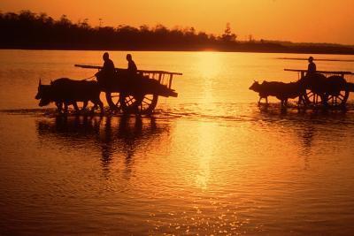 Nepal Loaded Bullock Carts Crossing Rapti River at Sunset--Photographic Print