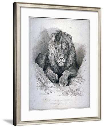 Nero, a Lion from Senegal, Now Exhibiting in the Tower of London, 1814-Edwin Henry Landseer-Framed Giclee Print