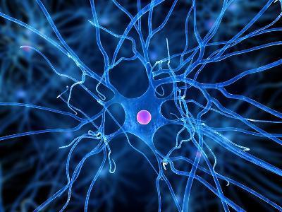 Nerve Cell, Artwork-SCIEPRO-Photographic Print