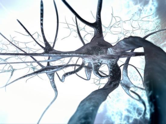 Nerve Cells, Computer Artwork--Photographic Print