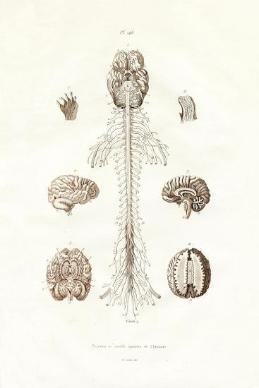 Nervous System, 1833-39--Giclee Print
