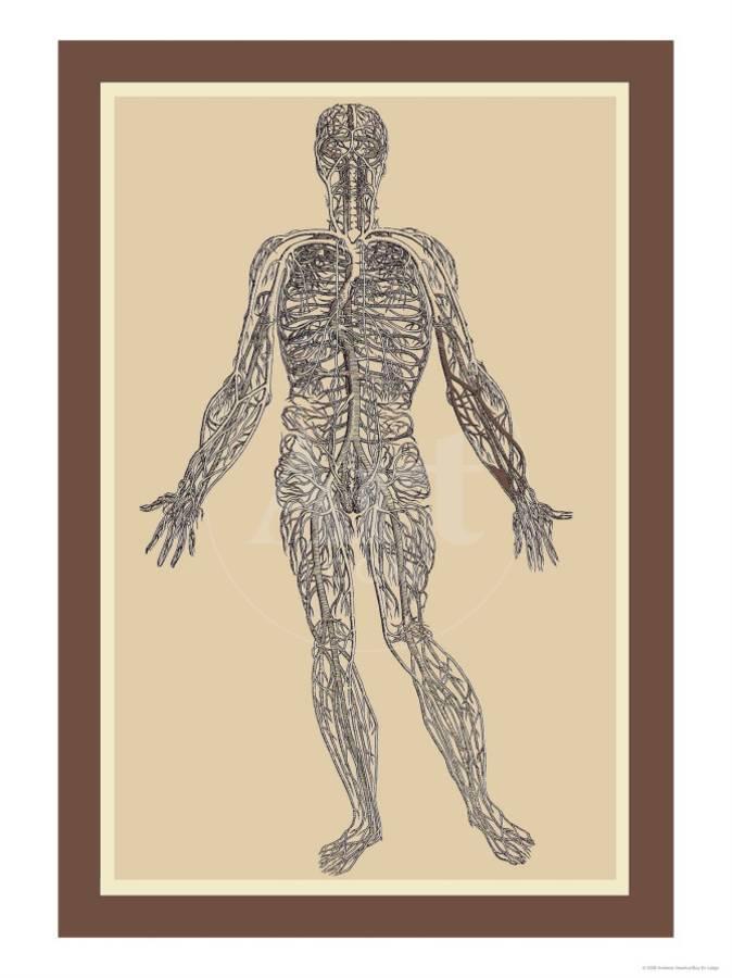 Nervous System Art Print By Andreas Vesalius Art