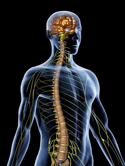Nervous System-PASIEKA-Photographic Print