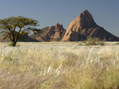 Nests of Weaverbirds, Spitskoppe Mountains, Damaraland, Namibia, Africa-Peter Groenendijk-Photographic Print