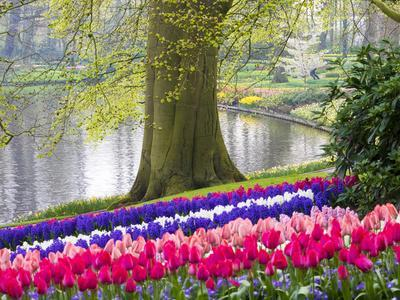 https://imgc.artprintimages.com/img/print/netherlands-lisse-multicolored-flowers-blooming-in-spring_u-l-q1gab0q0.jpg?p=0