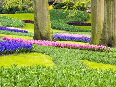 https://imgc.artprintimages.com/img/print/netherlands-lisse-multicolored-flowers-blooming-in-spring_u-l-q1gaeua0.jpg?p=0