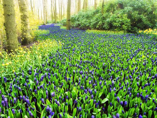 Netherlands, Lisse. Multicolored flowers blooming in spring.-Terry Eggers-Photographic Print