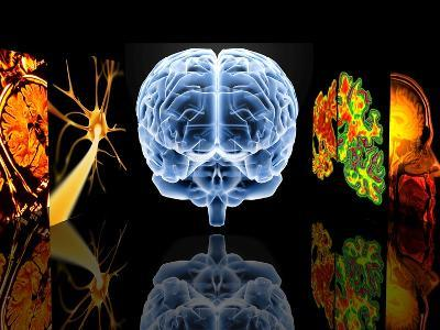 Neurology-PASIEKA-Photographic Print