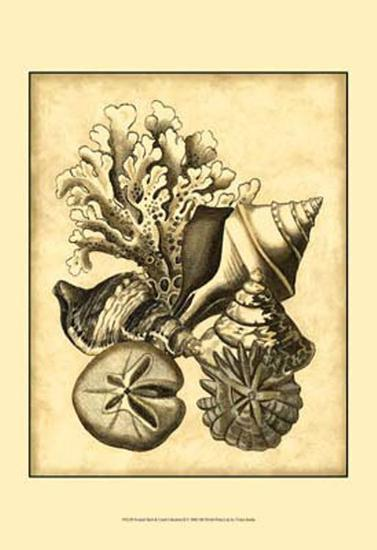 Neutral Shell and Coral Collection II--Art Print