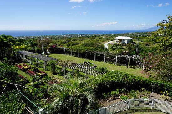 Nevis Botanical Garden, Nevis, St. Kitts and Nevis-Robert Harding-Photographic Print