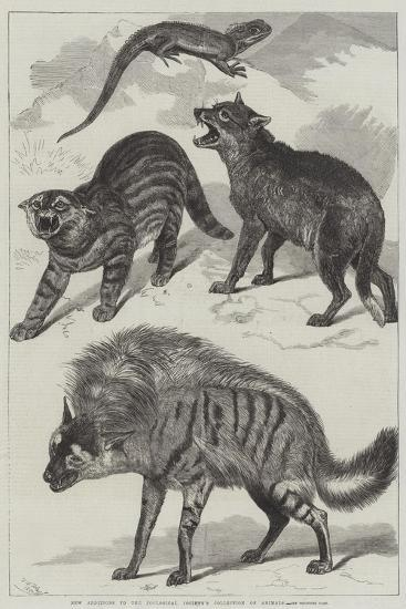 New Additions to the Zoological Society's Collection of Animals-Friedrich Wilhelm Keyl-Giclee Print