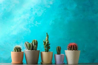 Beautiful Cactuses in Pots on Table against Color Background by New Africa