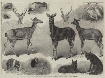 New Animals and Birds in the Zoological Society's Gardens, Regent's Park-Friedrich Wilhelm Keyl-Giclee Print