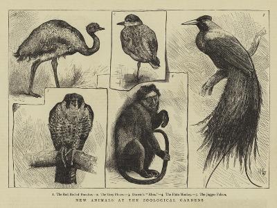 New Animals at Zoological Gardens-Harry Hamilton Johnston-Giclee Print
