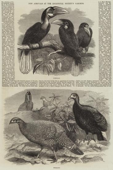 New Arrivals at the Zoological Society's Gardens-Thomas W. Wood-Giclee Print