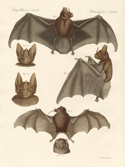 New Bats--Giclee Print