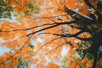 New England Autumn Color Design - Boston Massachusetts-Vincent James-Photographic Print