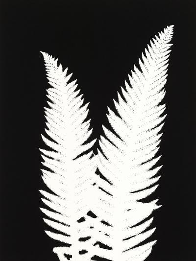 New Fern 9-Mary Margaret Briggs-Premium Giclee Print