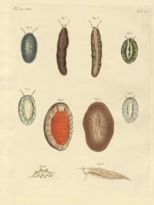 New-Foundes Worms