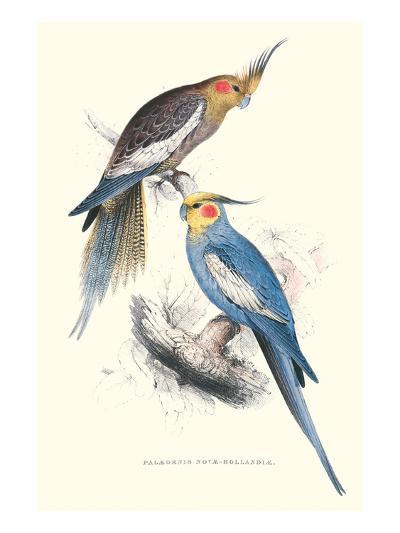 New Holland Parakeets -Nynphicus Hollandicus-Edward Lear-Art Print
