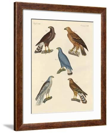 New known Birds of Prey--Framed Giclee Print