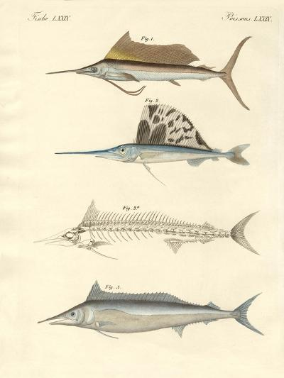 New Mackerel-Like Fish--Giclee Print