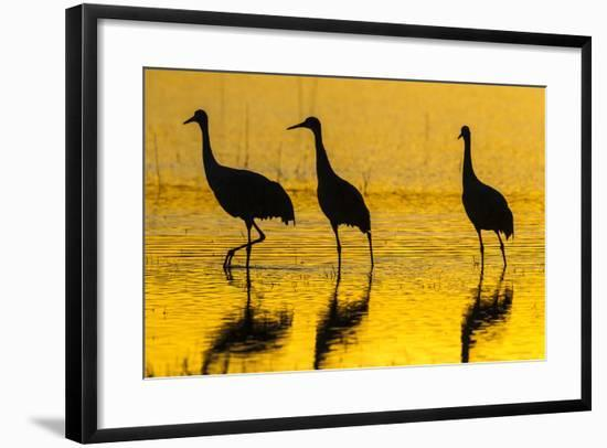 New Mexico, Bosque Del Apache National Wildlife Refuge. Sandhill Cranes at Sunset-Jaynes Gallery-Framed Photographic Print