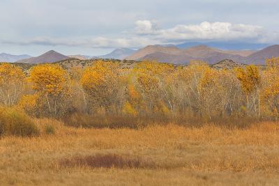 New Mexico, Bosque del Apache NWR. Fall Colors in Grasses-Don Paulson-Photographic Print