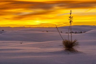 New Mexico, White Sands National Monument. Sunset on Desert and Yucca-Jaynes Gallery-Photographic Print