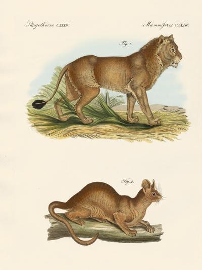 New Predatory Mammals--Giclee Print