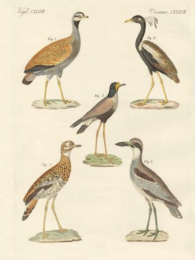 New Ratite Birds--Giclee Print