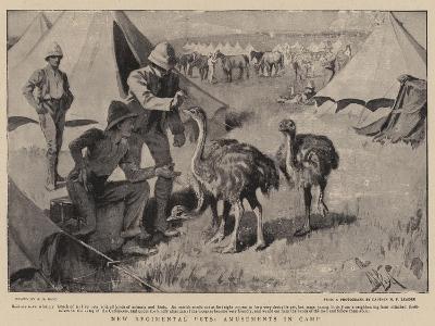 New Regimental Pets, Amusements in Camp-Alexander Stuart Boyd-Giclee Print