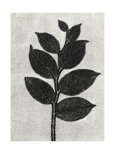 New Salal 1-Mary Margaret Briggs-Premium Giclee Print
