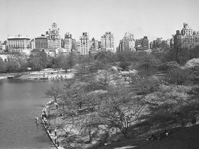 New York City, Central Park (B&W)-George Marks-Photographic Print