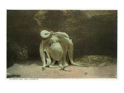 New York City, New York - Octopus at the Aquarium-Lantern Press-Art Print