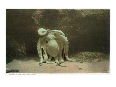 https://imgc.artprintimages.com/img/print/new-york-city-new-york-octopus-at-the-aquarium_u-l-q1goytu0.jpg?p=0