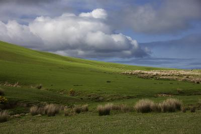 New Zealand, Asia, Catlins National Forest Grasses and Clouds-John Ford-Photographic Print