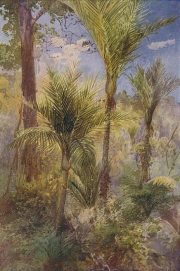 'New Zealand Forest', 1924-Unknown-Giclee Print