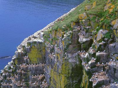 Newfoundland, Cape Saint Mary's Ecological Reserve-John Barger-Photographic Print
