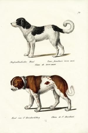 https://imgc.artprintimages.com/img/print/newfoundland-dog-1824_u-l-pupw000.jpg?p=0