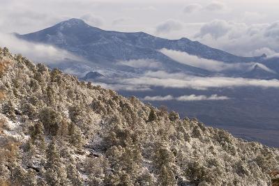 Newly Fallen Snow Along Wheeler Peak Scenic Drive in Great Basin National Park-Phil Schermeister-Photographic Print