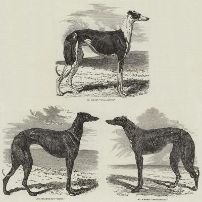 Newmarket Coursing Meeting-Harrison William Weir-Giclee Print