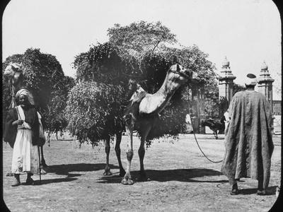 Camels Carrying Fodder, Egypt, C1890