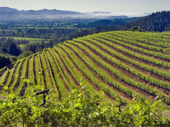 Newton Vineyard, Napa Valley, California, Usa-Janis Miglavs-Photographic Print