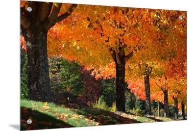 NG 1548436--Art on Acrylic